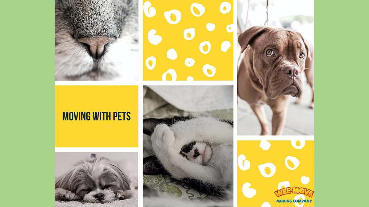 MOVING WITH PETS: NEW GUIDE in 2021